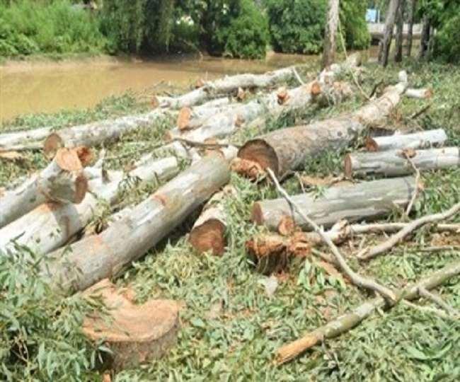 इंडोनेशिया और ब्राजील में सबसे तेजी से हो रही है जंगलों की कटाई, जानें-भारत के कितने जंगल कट रहे